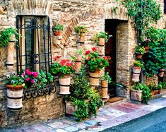 Flower Covered House Assisi Italy Photo Flower Pots Umbria | Etsy