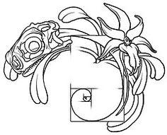golden ratio tattoo - Google Search