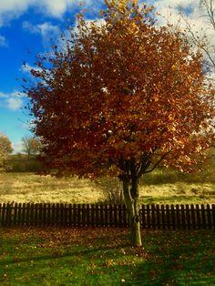 Tree in my backyard