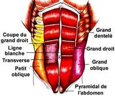 Musclez vos Abdominaux! 13 exercices parfaits pour un bon gainage de votre ceinture abdominale. Les abdominaux assurent la tonicité de l'abdomen.