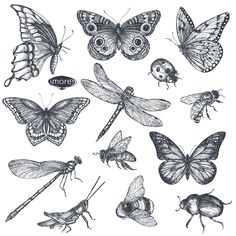 Vector insects and wildflowes set by Fancy art on Flash Art Tattoos, Body Art Tattoos, Small Tattoos, Black Tattoos, Tropisches Tattoo, Piercing Tattoo, Tattoo Drawings, Piercings, Moth Tattoo