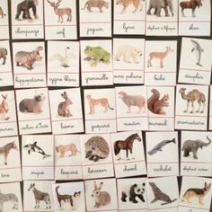 cartes de nomenclature animaux Montessori Education, Montessori Materials, Montessori Activities, Activities For Kids, Glenn Doman, Animal Articles, Fun Facts About Animals, Shapes For Kids, Kids Homework