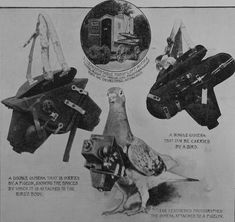 A World War One Pigeon Camera