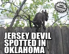 JERSEY DEVIL SPOTTED IN OKLAHOMA