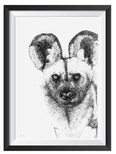 African Wilddog illsutrated with Pen by Nicoll van der Nest