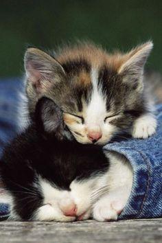 Sshhhh! Do not disturb !!