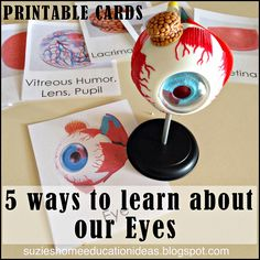 Suzie's Home Education Ideas: 5 ways to learn about our Eyes. book list and flash cards of parts of the eye. Human Body Science, Human Body Activities, Human Body Unit, Kids Learning Activities, Science Activities, Science Projects, Science Resources, Science Biology, Science Lessons