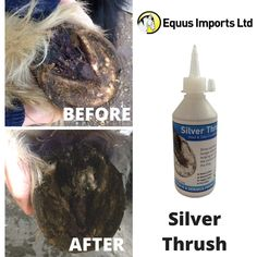 Amazing testimonial in this week for our fantastic product Silver Thrush: http://www.equusimports.co.uk/testimonials  #HoofCare #EquineThrush