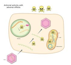 This image illustrates an antiviral drug causing adverse effects. The skull and crossbones, which represent the antiviral drug, illustrate that the drug gets not only into the viral RNA, but also into the healthy mitochondrial RNA, causing side effects and problems. Credit: Craig Cameron lab, Penn State University