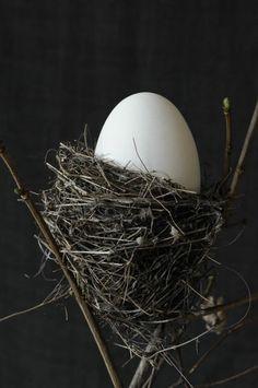 white with black background | Easter egg . Osterei . œuf de Pâques | Photo: Fotosache Arndt | #NIEggs