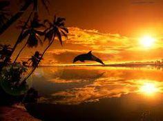 Nos frères des eaux, le Dauphin  les Anges, les Esprits de la Nature tout comme les Dauphins ne sont pas des entités à proprement parler. Et ils n'ont pas non plus ailes, auréoles, mocassins à boucles ou ailerons. Ce sont simplement des énergies, des fréquences, des vibrations, avec lesquelles nous entrons en résonance à l'intérieur de nous, comme si notre corps était un énorme transistor muni d'un tuner et que l'on déplaçait notre curseur pour capter plutôt une radio ou une autre.