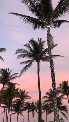 California palm tree wallpaper sky 57 New Ideas Tree Wallpaper Iphone, Summer Wallpaper, Trendy Wallpaper, Aesthetic Iphone Wallpaper, Aesthetic Wallpapers, Wallpaper Backgrounds, Beautiful Wallpaper, Palm Tree Emoji Wallpaper, Travel Wallpaper