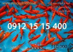 تهران _ ستارخان ( سیم کارت خود به قیمت بفروشید و از ما ارزان بخرید ) Carrots, Vegetables, Food, Essen, Carrot, Vegetable Recipes, Meals, Yemek, Veggies