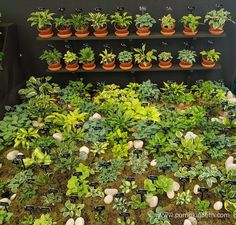 A look at Hogarth Hostas exhibit of small and miniature Hostas, inside the Great Pavilion, at the RHS Chelsea Flower Show Hampton Court Flower Show, Chelsea Flower Show, Garden Gifts, Exhibit, Pavilion, Garden Inspiration, The Hamptons, Lust, Garden Design