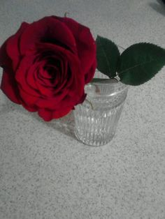The rose my baby got me c: