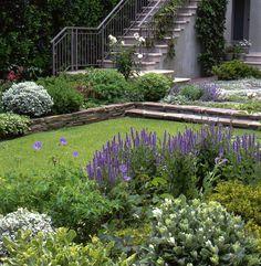 Elizabeth Everdell Garden Design - Pacific Heights Backyard
