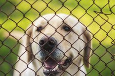 What to Put on the Ground in a Dog Run   Cuteness.com