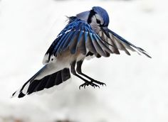 in mid air Photo by Isabelle M. -- National Geographic Your Shot