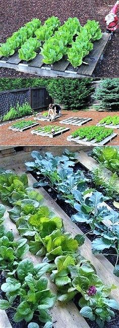 Reuse wooden pallets and make a Garden.