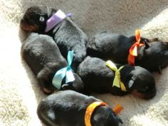 Say Hello To Wiggy's Litter! | Cutest Paw