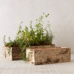 "This site has beautiful things from decor to kitchen to outdoor stuff. Perfect for holding a meadow-inspired planting or a centerpiece of fresh cuts, this rustic planter is made from natural birch bark with stitched detailing.- Birch bark, jute, plastic liner- Indoor or sheltered outdoor use- Drainage hole not included- ImportedSmall: 4""H, 5""W, 12""LLarge: 4""H, 6""W, 18""L"