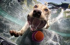 Underwater Photos of Really Awesome Dogs - Portland's Soft Rock