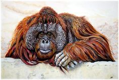 ARTFINDER: Watching you, watching me by Nicola McLean - This is a painting on watercolour paper in gouache. Orang-utans are my favourite of all our closely related primate cousins and I fell in love with the wise ...
