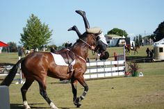 """Horses response: """"brah. water you doin?""""    oh shit    That's gonna hurt  #hunter_jumpers  #equine_equine"""