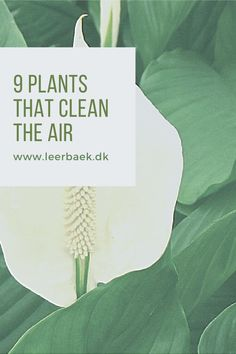 Read more and become wise... Air Purifier, Plant Leaves, Plants, Plant, Planets