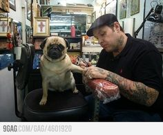 pug tattoo- I hope this a photo opp and not real!