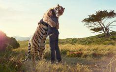 man hugging tiger (or tiger hugging man)...grown up Calvin & Hobbes...