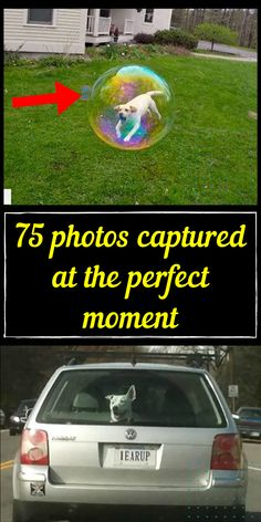 These days, taking photos is much more straightforward. You point your phone, click the button, and then you can review it immediately. #awesome #amazing #facts #funny #humor #interesting #trending #viral #news #entertainment #memes #facts Animals And Pets, Cute Animals, Girl Photography Poses, Amazing Facts, Nature Wallpaper, Weird Facts, Funny Humor, Amazing Nature, Animals Beautiful
