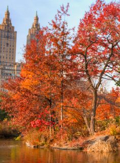 Autumn in the City: New York, what to do, eat, see, 2014