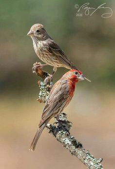 Birds, Nature, Animals, Animaux, Bird, Animal, Animales, Nature Illustration, Off Grid