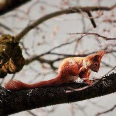 Die #Eichhörnchen freuen sich auch schon auf den #Frühling. #spring #summer #munichsumer #munich #münchen #squirl