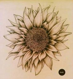 Sunflower- Detail of this tat (would ad more color)