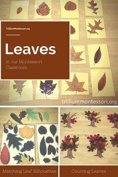 Leaves in our Montessori Classroom