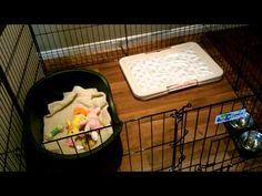puppy playpen setup - Google Search