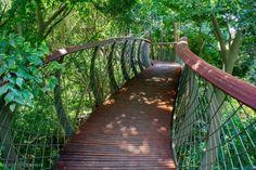 Città del Capo, la pedana dove è possibile passeggiare sulla cima degli alberi