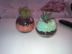 Cactus en terrarios pequeños