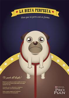 Pug on Behance