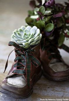 Old pair of baby shoes, succulents and you have beautiful art