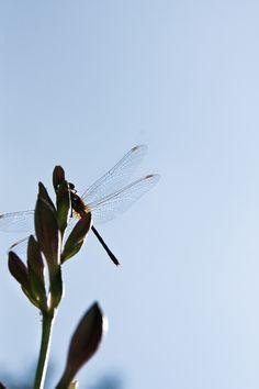 fly on - photo by: jessika gosen
