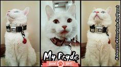 My #KittyPryde showing off her #WalkingDead collar.  #deharo70 @deharo70 #MILEStones #xpupspack #Kittens #Cats #CatLover #CatsOfTheApocalypse  #TWD @TheWalkingDead #TalkingDead @AMCTalkingDead @WalkingDead_AMC
