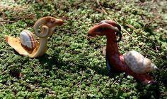 """Самые необычные моллюски в мире - """"драконьи улитки"""", названные так из-за необычной формы головы."""