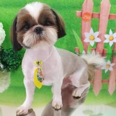 Pet Shop, Puppy Haircut, Dog Grooming Styles, Dog Haircuts, Love Dogs, Hair Cuts, Puppies, Dog Hair Removal, Cutest Puppy