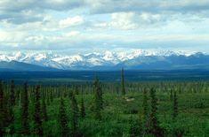 De boreale zone bevindt zich vooral in het midden van Rusland. In de boreale zone zijn veel naaldbossen te vinden. De temperatuur is laag. Het land wordt gebruikt voor veeteelt en akkerbouw.
