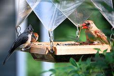 Siete formas de construir comederos para aves con materiales reciclados
