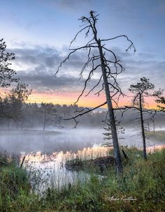 *🇫🇮 Dawn (Finland) by Asko Kuittinen 🌅 Finland Summer, Secret Places, Watercolor Landscape, Tree Of Life, Food Pictures, Sunrise, Nostalgia, Scenery, Photography