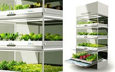Farming of the future: Experiment with hydroponics in your home › HellaWella.com